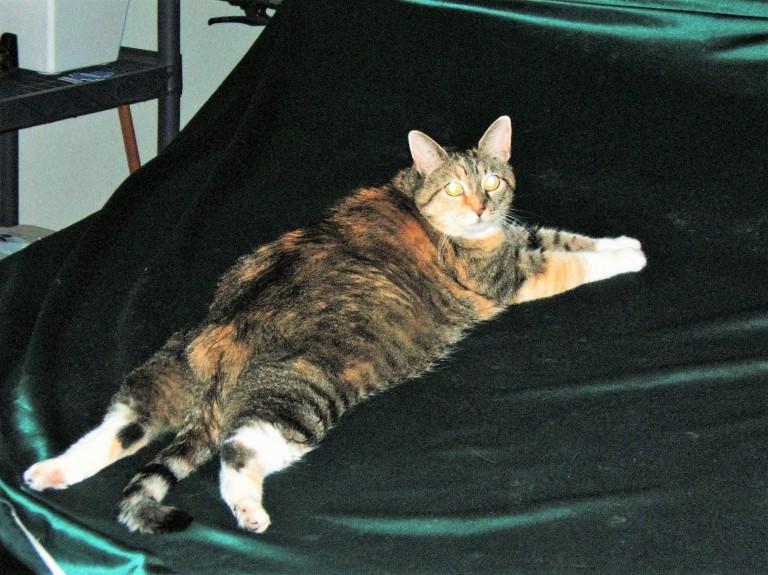 Cat 06 005